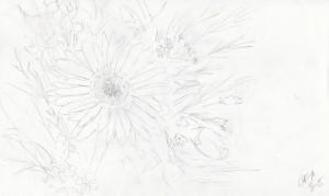 Daisy sketch Carolyn Almendarez