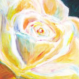 White Rose Carolyn Almendarez