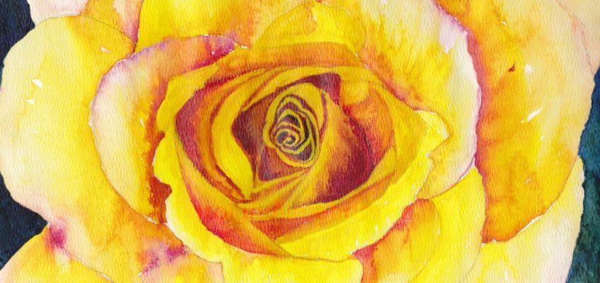 Yellow Rose Watercolor by Carolyn Almendarez